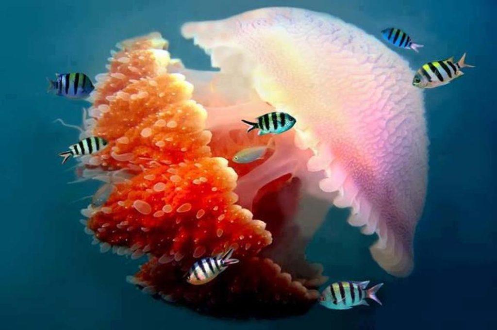 страховка на Кипр, какие морские обитатели смогут нанести вред